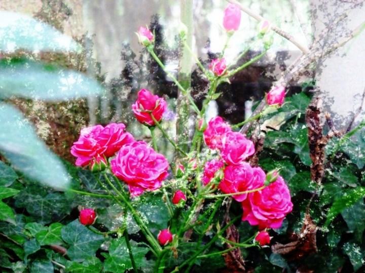 S6 FlowerPower Fantasy 10 voor FB