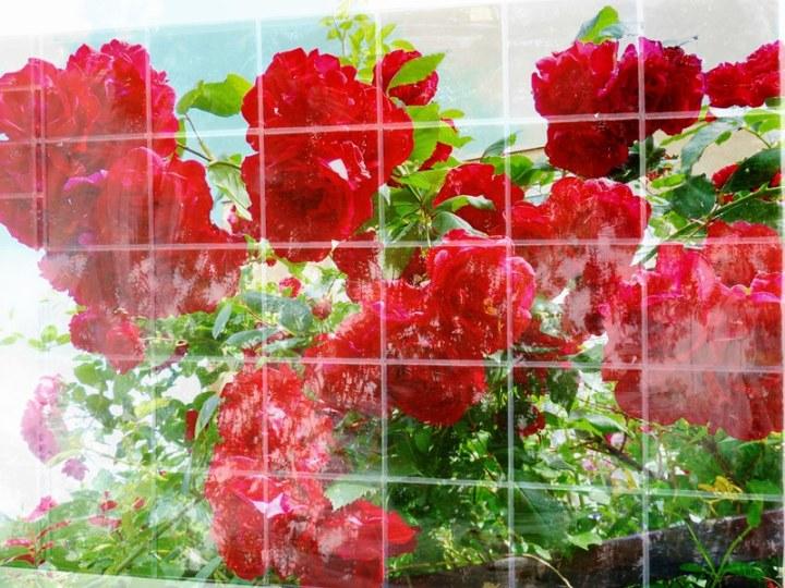 s6 flowerpower fantasy 12 voor FB
