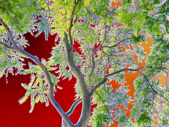 s6 tree magic 35-A voor FB