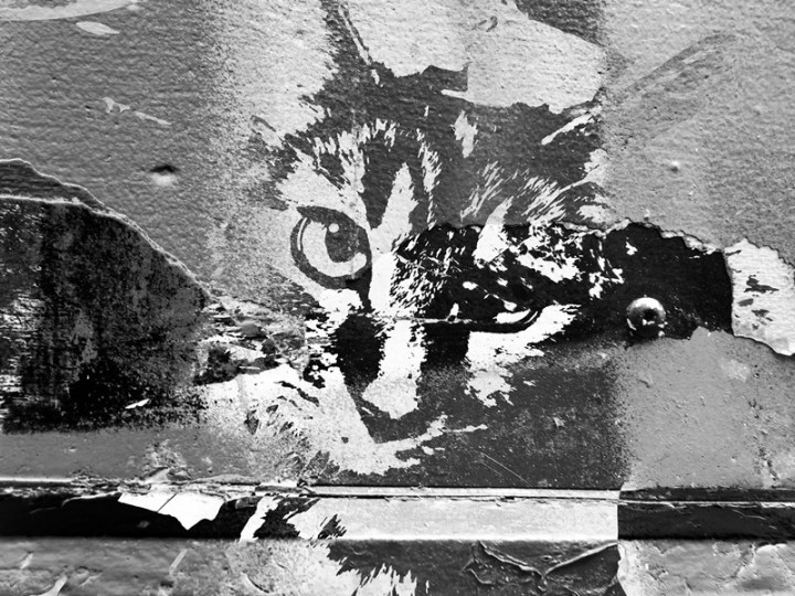 MoArt Urban Cats Diva 3
