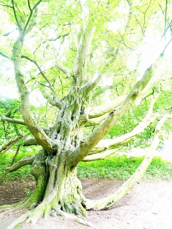 MoArt Rotterdam Tree Magic 20