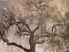 MoArt Tree Magic 3