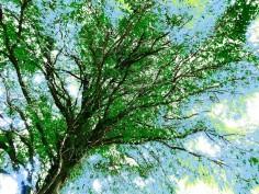 MoArt Tree Magic 67