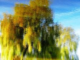 MoArt Tree Magic 77