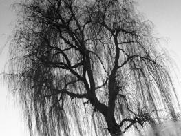MoArt Tree Magic 81