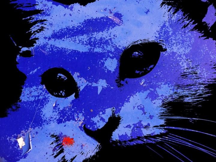 MoArt Urban Cats - Indy 3