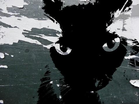 MoArt Urban Cats - Storm 2