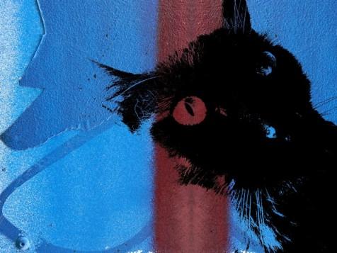MoArt Urban Cats - Storm 6