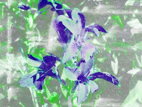 MoArt FlowerPower Fantasy 5b