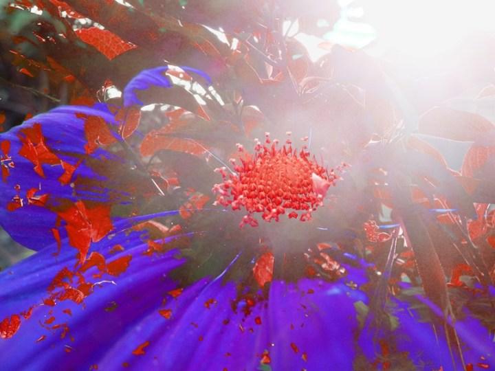 MoArt FlowerPower Fantasy 8