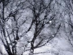 MoArt Tree Magic 28