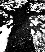 MoArt Tree Magic 34