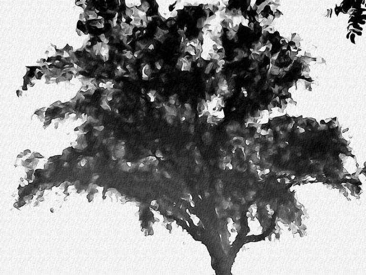 MoArt Tree Magic 41