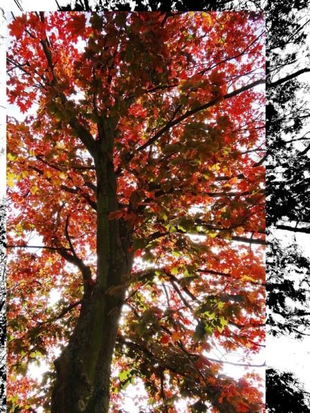 MoArt Tree Magic 57