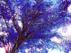 MoArt Tree Magic 58 - Fairy Colors