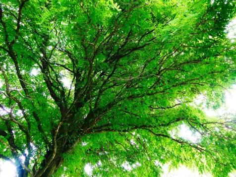 MoArt Tree Magic 58