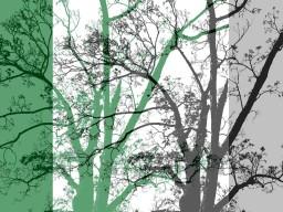 MoArt Tree Magic 64