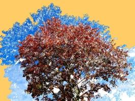 Tree Magic 68