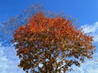 MoArt Tree Magic 68