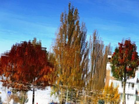 MoArt Tree Magic 69