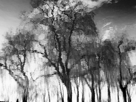 MoArt Tree Magic 78