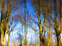MoArt Tree Magic 79