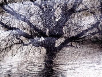 MoArt Tree Magic 8