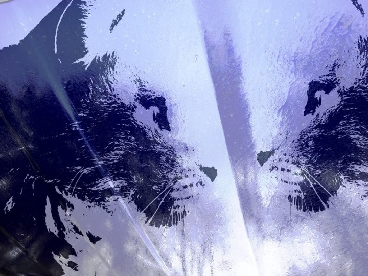MoArt Urban Cats Odin 5