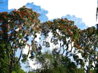 MoArt Tree Magic 45