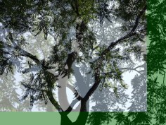 MoArt Tree Magic 39