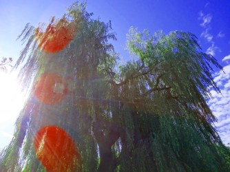 MoArt Tree Magic 42