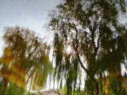 MoArt Tree Magic 53