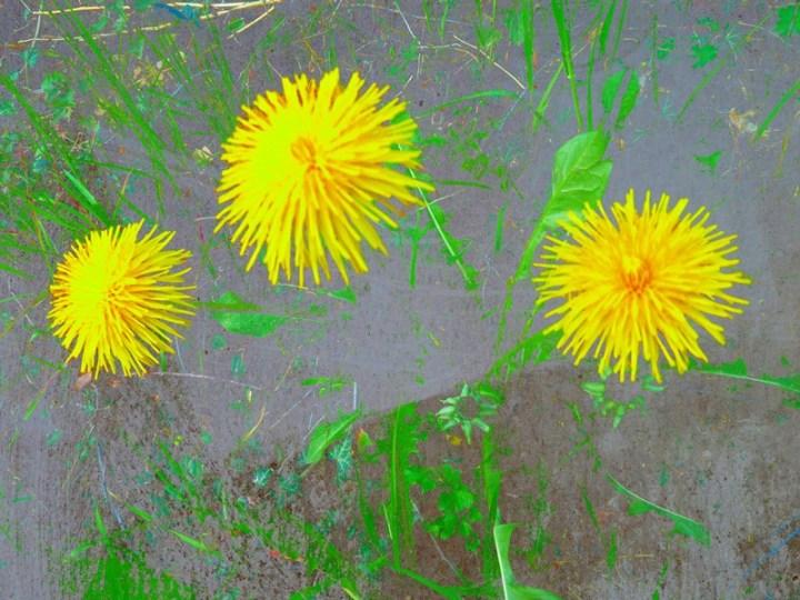 MoArt FlowerPower Fantasy 3b
