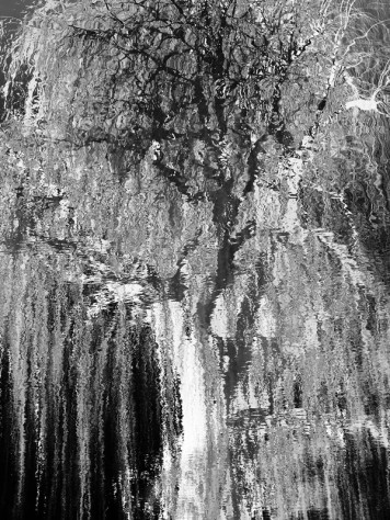 MoArt Tree Magic 83