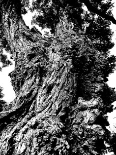 MoArt Tree Magic 88