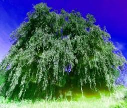 MoArt Tree Magic 94