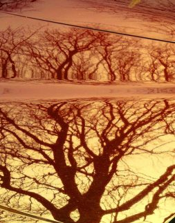 MoArt Tree Magic 95