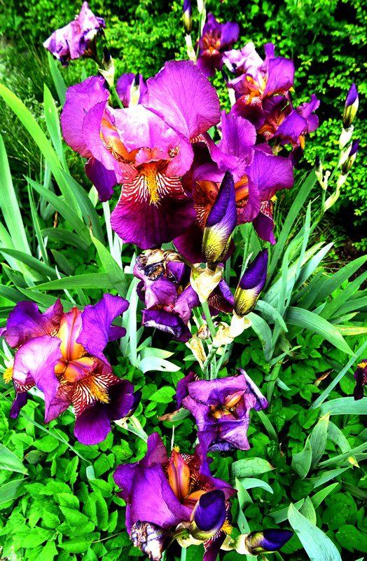 MoArt FlowerPowerFantasy 18