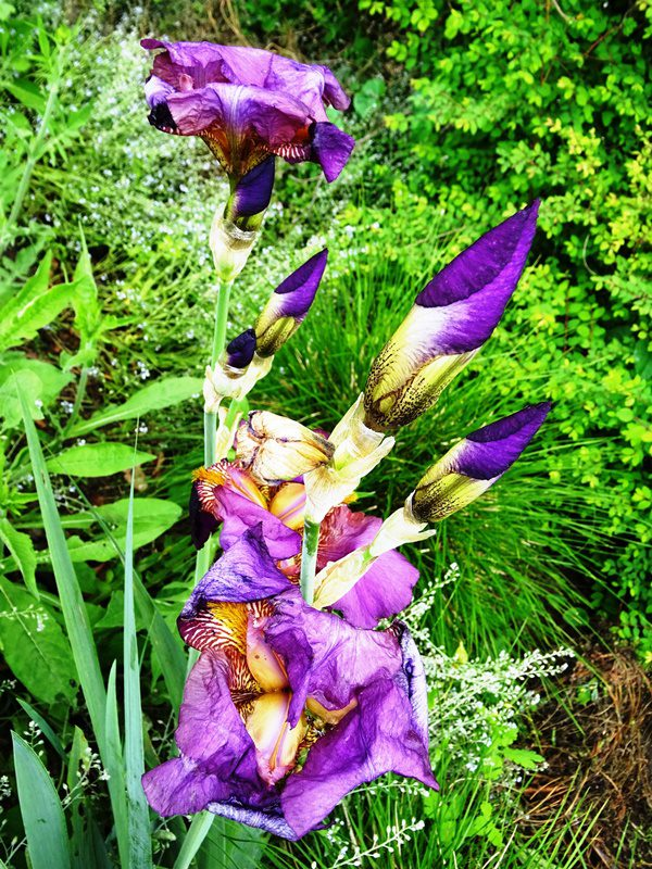 MoArt FlowerPowerFantasy 19