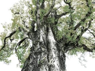 MoArt Tree Magic 118 - nightfall