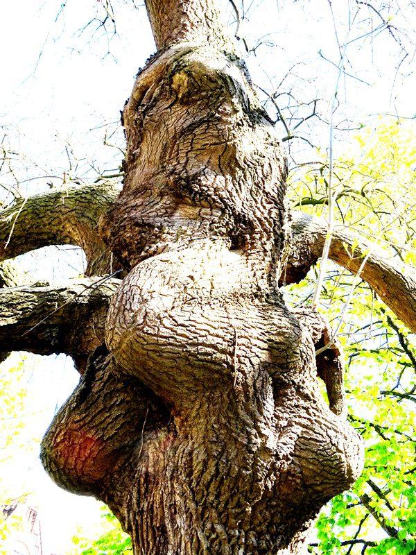 MoArt Tree Magic 126