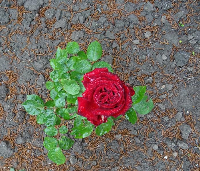 MoArt FlowerPowerFantasy 21 voor FB