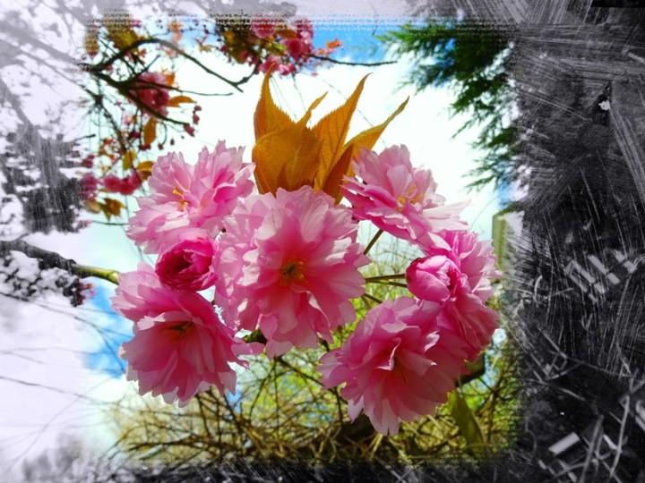 MoArt FlowerPowerFantasy 22