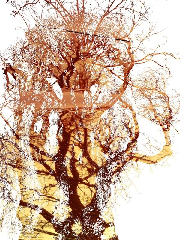 MoArt Tree Magic 99