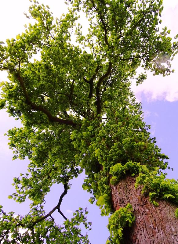MoArt Tree Magic 102