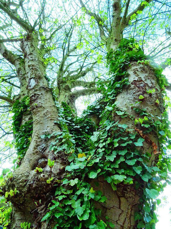 MoArt Tree Magic 109