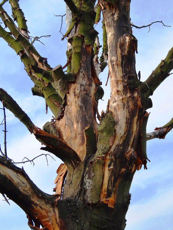 MoArt Tree Magic 140