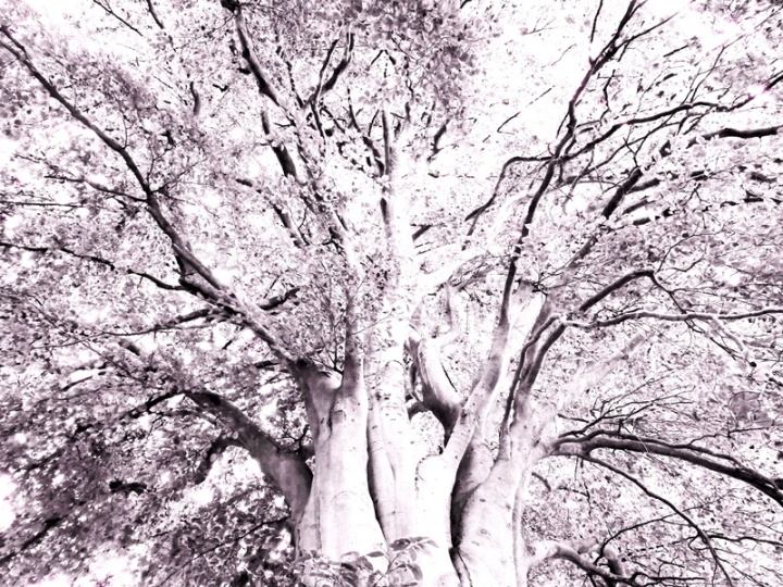 MoArt Tree Magic 142-B