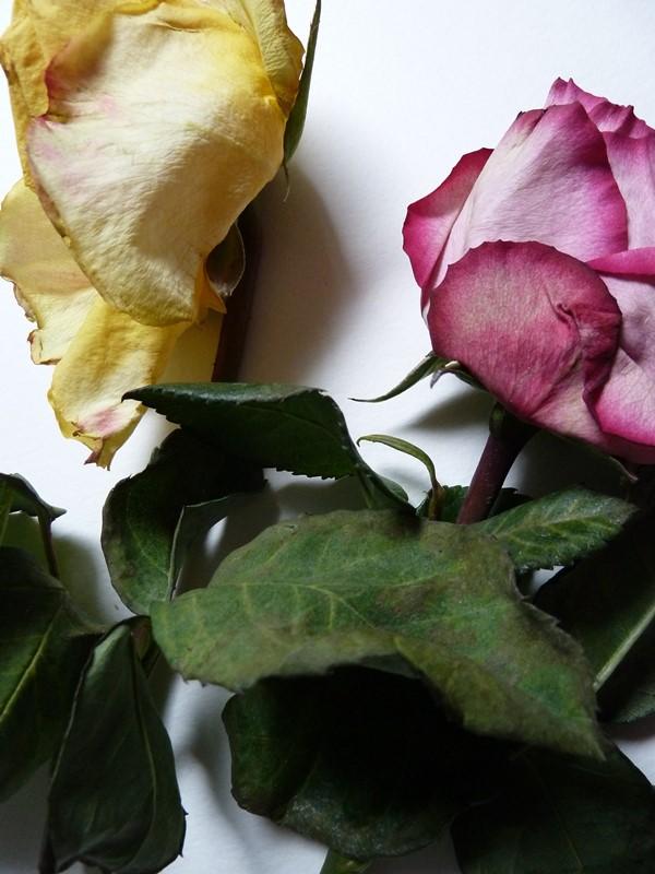 flowerpower-fantasy-incommunicado-1-voor-fb-300dpi
