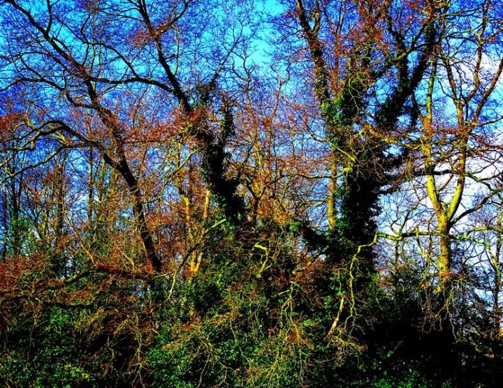 MoArt Tree Magic 149